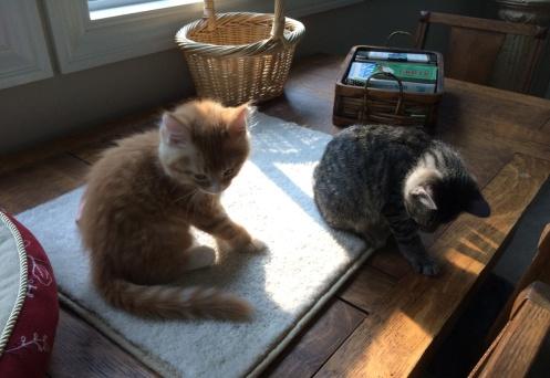 Kittens_August-8-2014