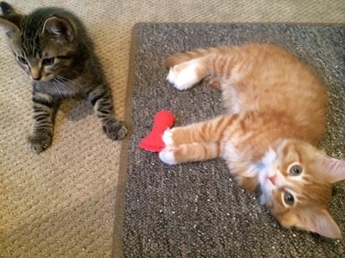 Kittens_August_15_2014