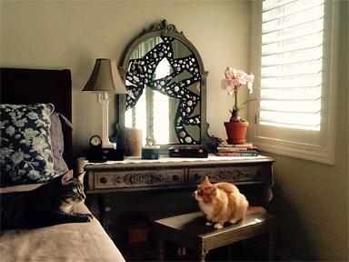 Mirror - Cats